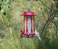 Homestead Long Stem Scarlet Rose Bird Feeder
