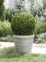 Zodax Single Potted Ball Boxwood Topiary