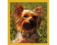 Magnetic Bookmark Yorkshire Terrier