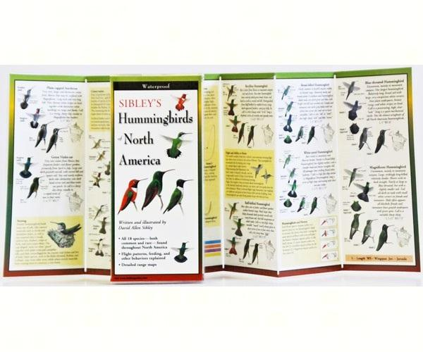LEWERSHN156Sibley's Hummingbirds of N. America Folded Guide