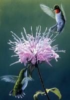Tree Free Greetings Hummingbird Treat Blank