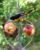 Songbird Essentials Johnny Apple Bird Feeder