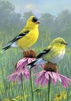 Tree Free Greetings Goldfinch & Coneflowers Blank