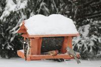 Songbird Essentials 14 inch Bird Feeder with Suet