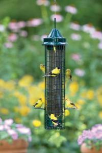 Squirrel Proof Bird Feeders by Bird's Choice