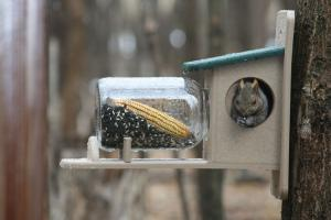 Squirrel Houses & Feeders by Bird's Choice
