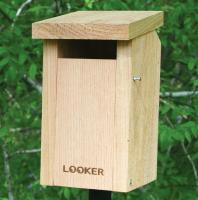 Songbird Essentials Bluebird Slot