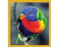 Magnetic Bookmark Rainbow Lorikeet
