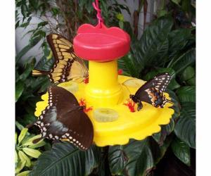 Butterfly Gardens by Songbird Essentials