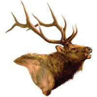 Rivers Edge Products Elk Auto Magnet