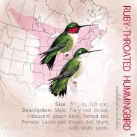 Tree Free Greetings Ruby-Throated Hummingbird Magnet