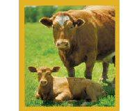 Magnetic Bookmark Cow With Calf (Brown)