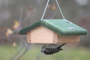 Suet Feeders by Bird's Choice