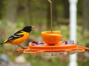 Oriole Feeders by Bird's Choice