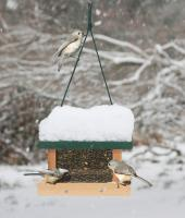 Songbird Essentials Little Looker Bird Feeder
