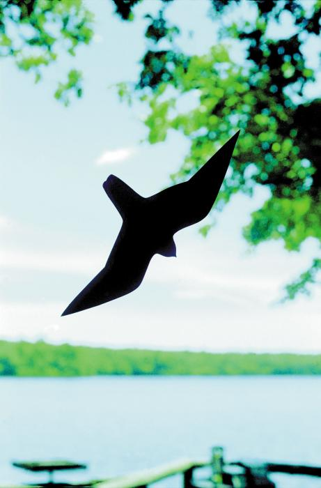 Birds Choice Birdsaver Window Decal, Reduces Number of Birds that Fly into Your Window