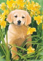 Tree Free Greetings Golden Puppy Blank