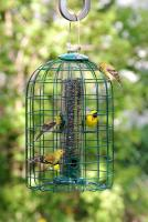 Woodlink Caged Seed Tube Bird Feeder