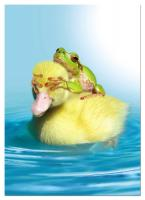 Tree Free Greetings Duck Duck Frog Birthday