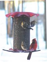 Bird's Choice 3 Qt.-Red-Sunflower Forever Bird Feeder