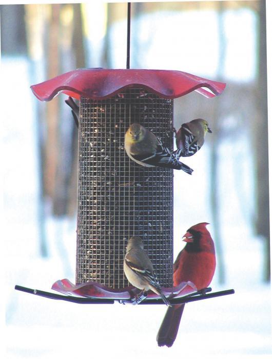 Bird's Choice 3 Qt.-Red-Sunflower Forever Bird Feeder