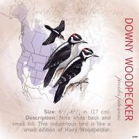 Tree Free Greetings Downy Woodpecker Magnet