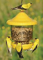 Songbird Essentials Clingers Only Bird Feeder (yellow)