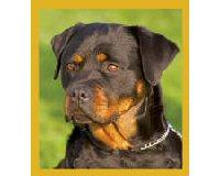 Magnetic Bookmark Rottweiler Puppy