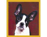 Magnetic Bookmark Boston Terrier