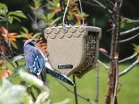 Birds Choice Recycled Peanut Bird Feeder with Hanging Cable