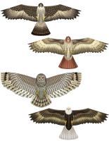 Flying Colors Birds of Prey Kite Assortment (12 pcs)