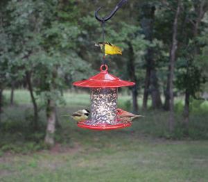 Cardinal Feeders by Songbird Essentials
