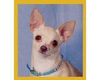 Magnetic Bookmark Chihuahua Peppita