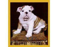 Magnetic Bookmark Bulldog Puppy